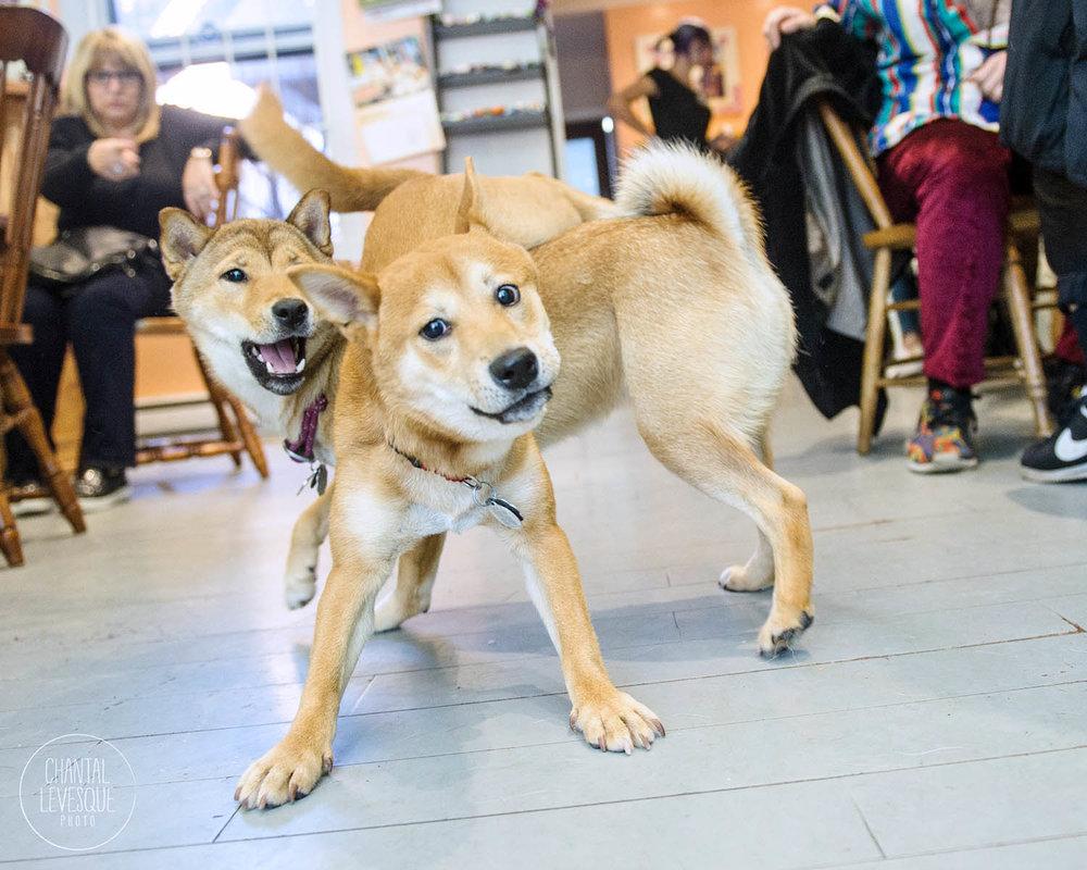 Doggy-casting-basenji-9510.jpg