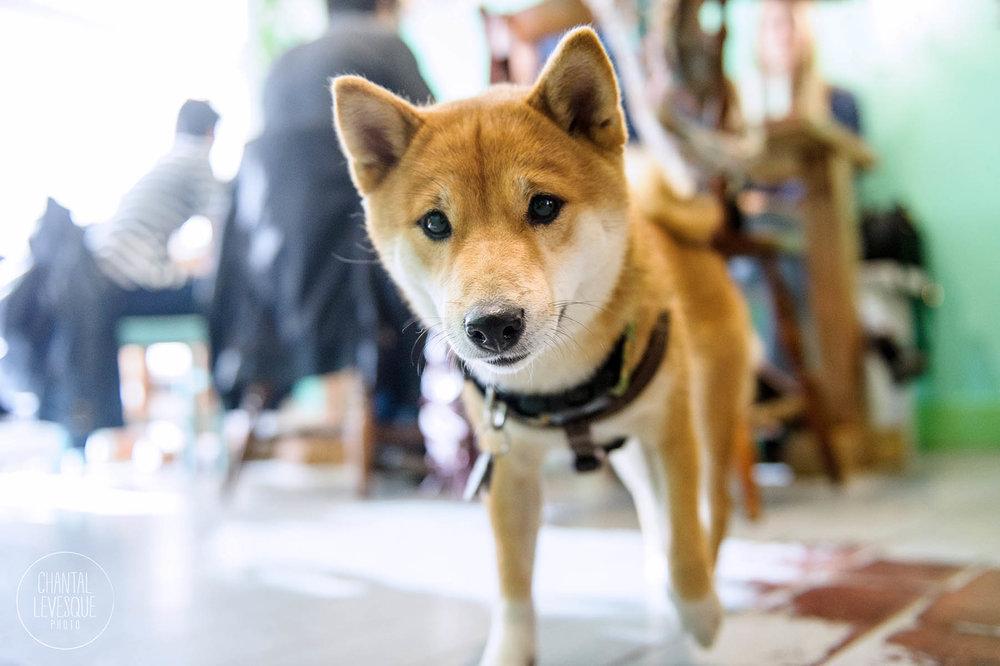Doggy-casting-basenji-9821.jpg