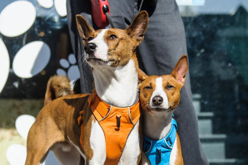 Doggy-casting-basenji-9761.jpg