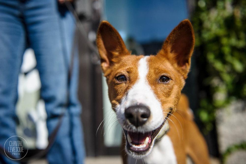 Doggy-casting-basenji-9198.jpg