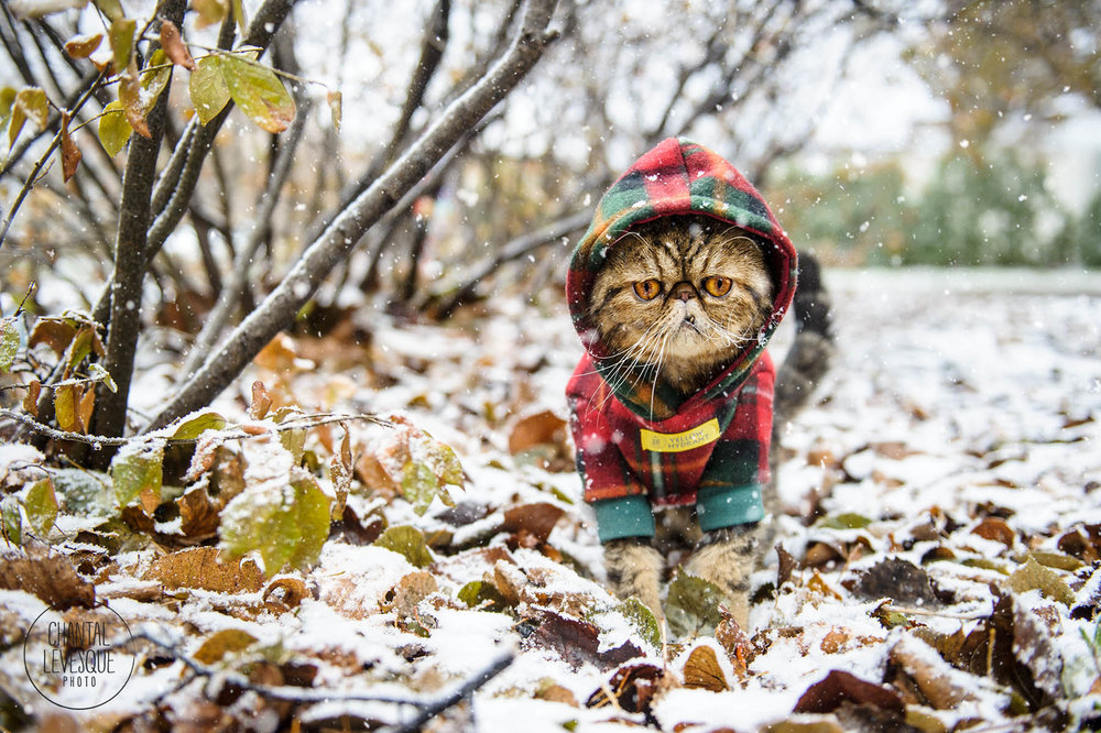 cat-photography-snow-montreal.jpg