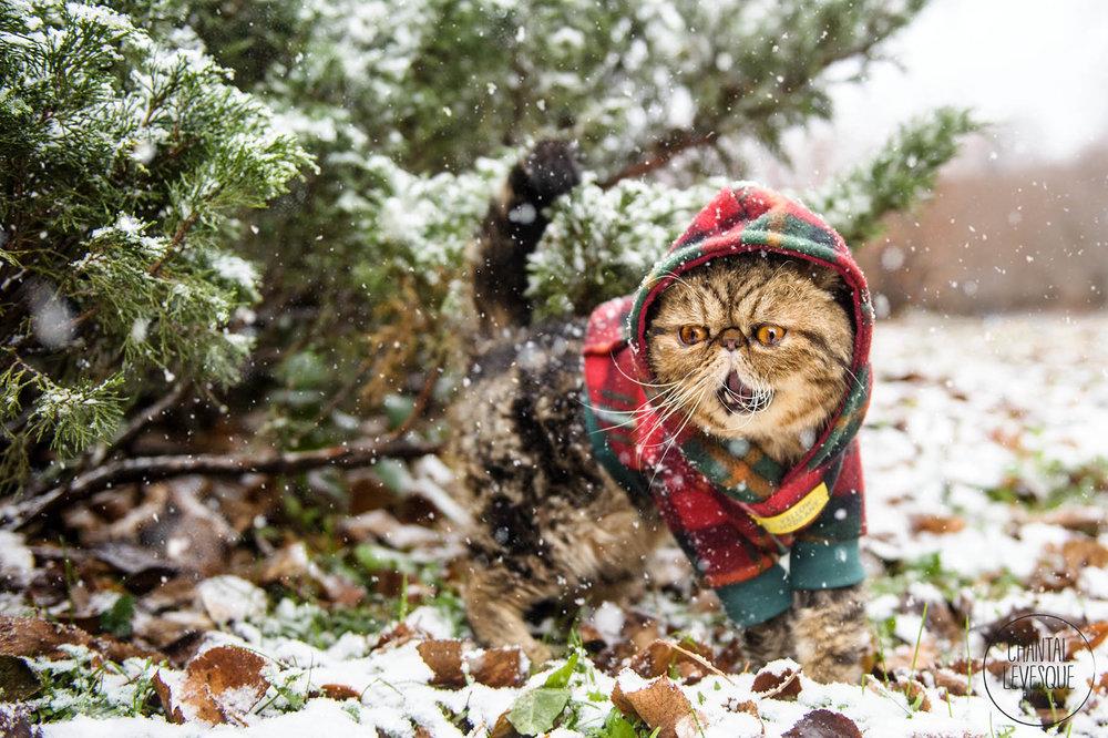 photographe-chats-montreal.jpg