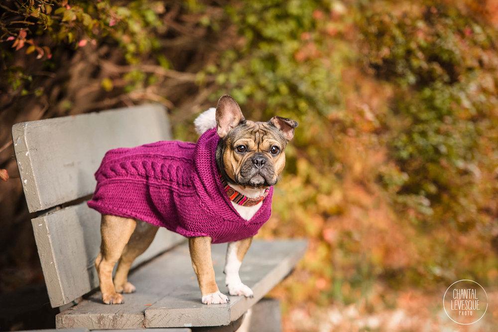 photographe-chien-westmount.jpg