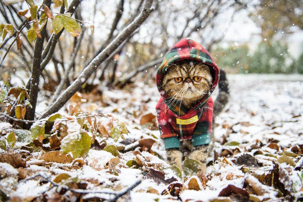 cat-snow-photography-9702.jpg