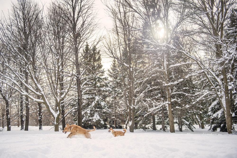 lifestyle-dog-photography-canada.jpg