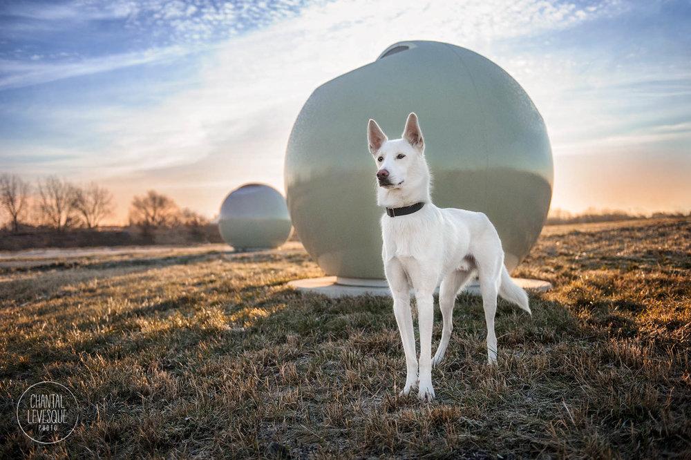 white-husky-sci-fi-portrait.jpg
