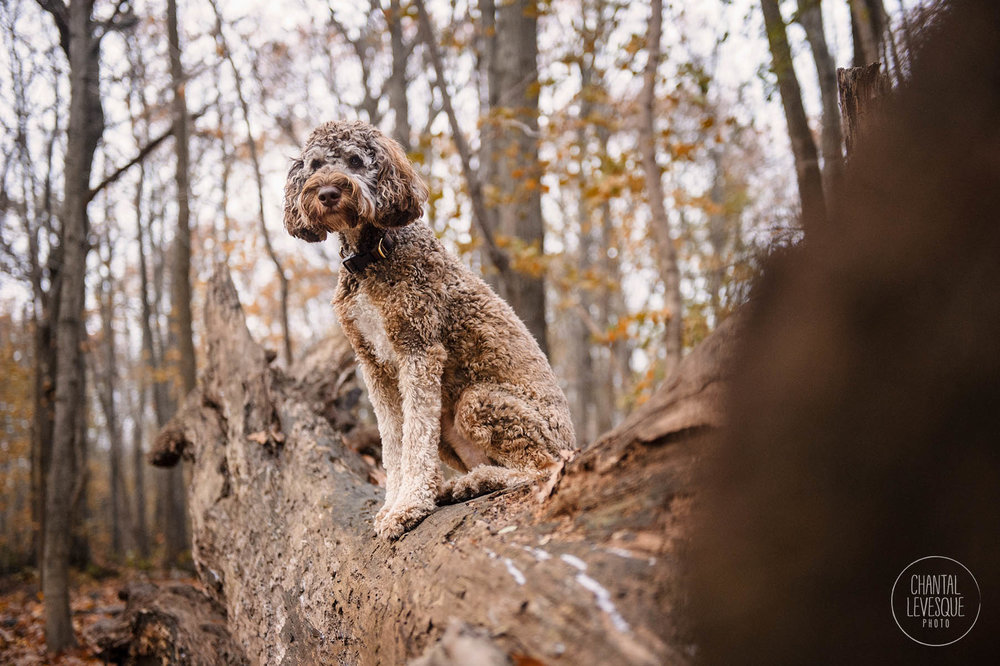doodle-forest-photography-westmount.jpg