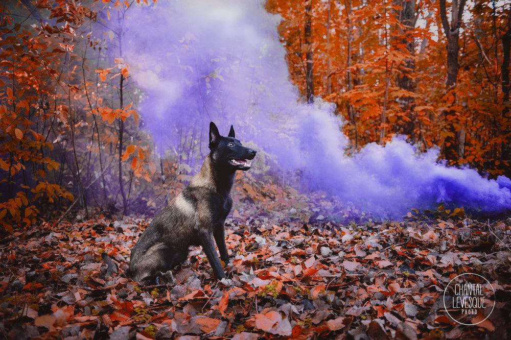 dog-woods-fashion-photography.jpg