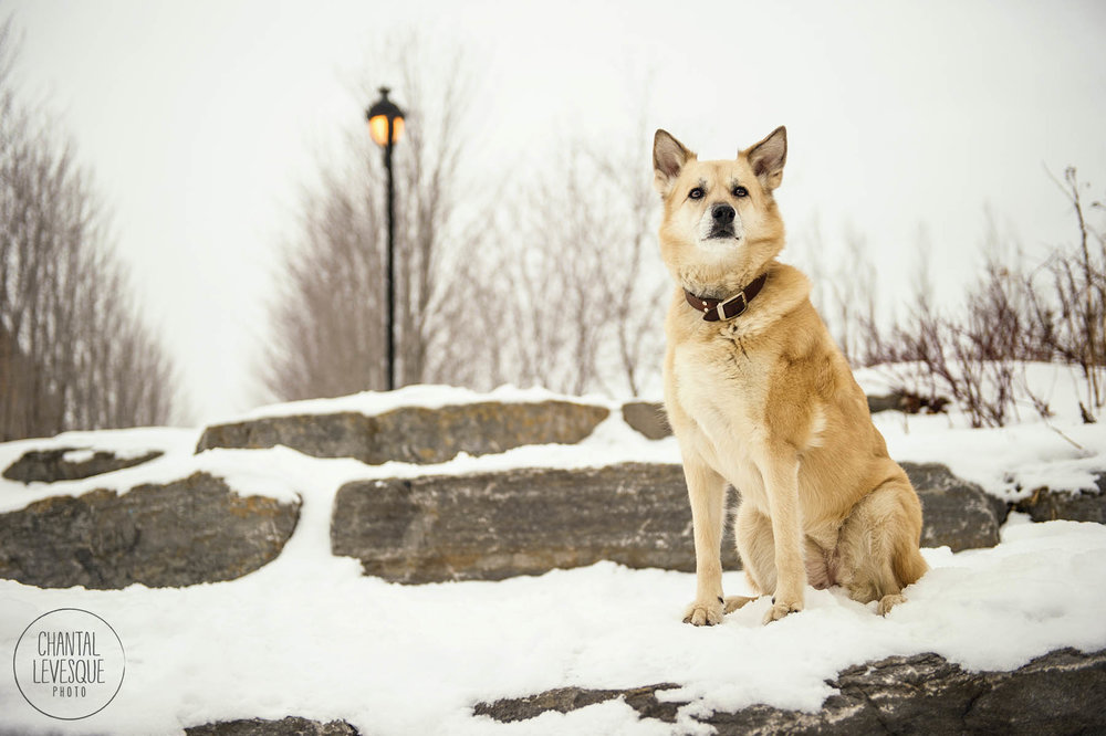 photographe-professionnelle-montreal-chien.jpg