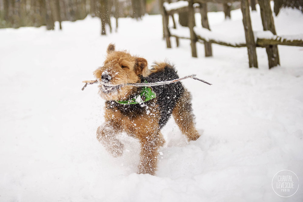 dog-playing-snow-canada.jpg