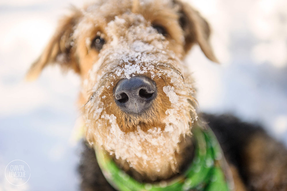 snow-snout-photography.jpg