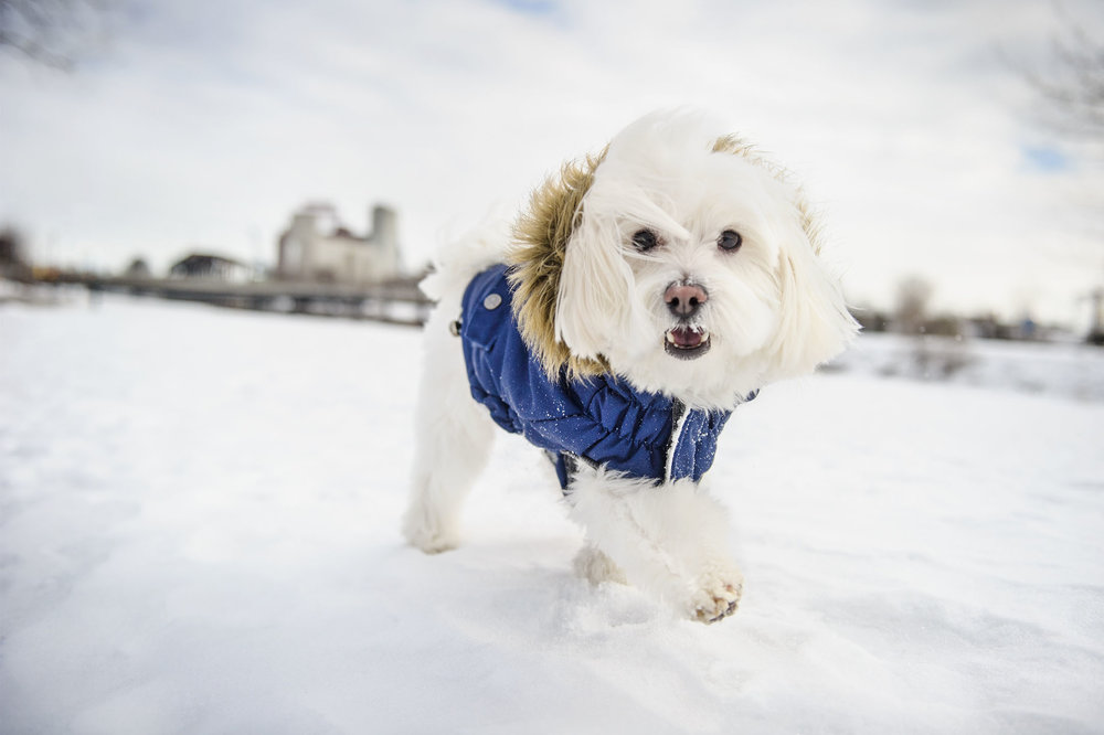winter-commercial-dog-photography.jpg