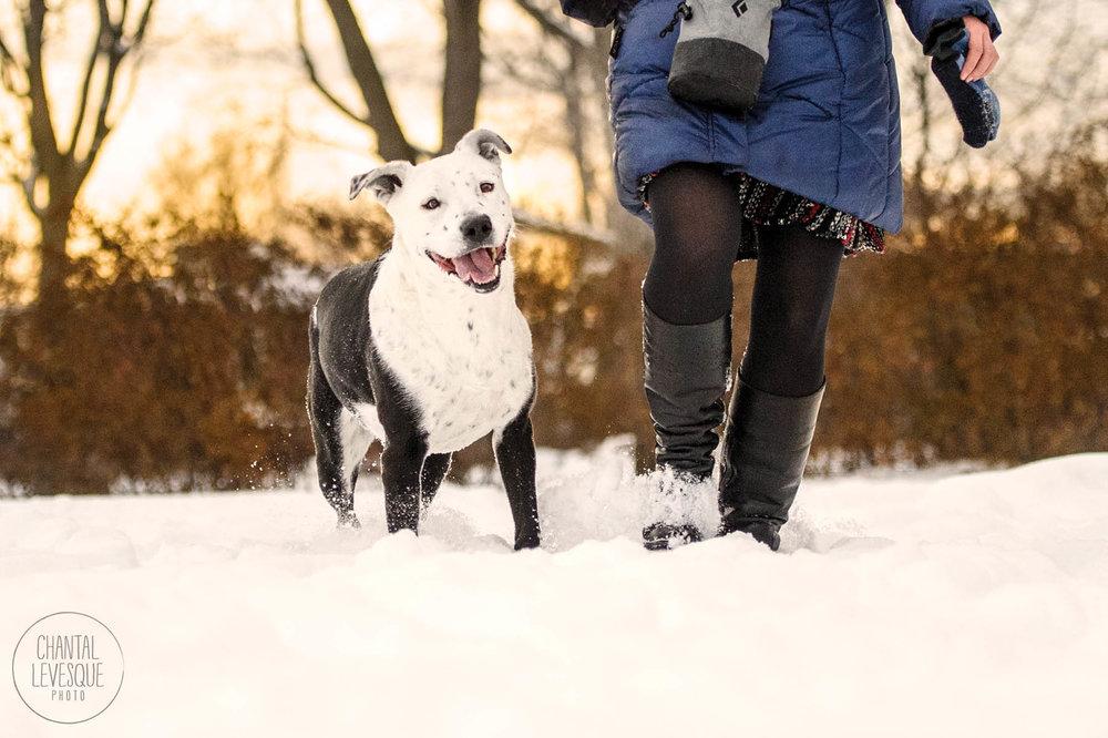 pitbull-snow-montreal.jpg