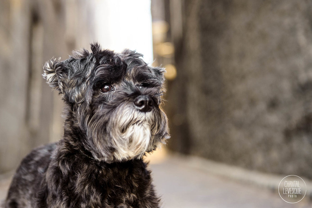 dog-portrait-old-montreal-alley.jpg