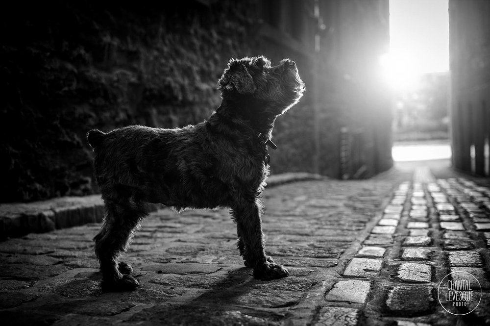 black-dog-professional-photographer-canada.jpg