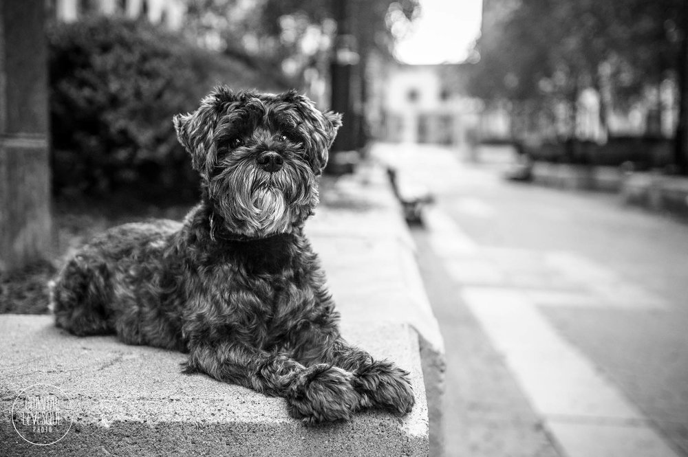 photographe-commerciale-chien-montreal.jpg