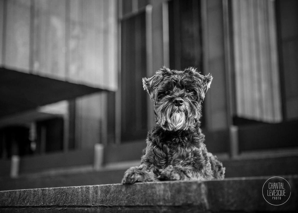 urban-dog-photography-quebec.jpg