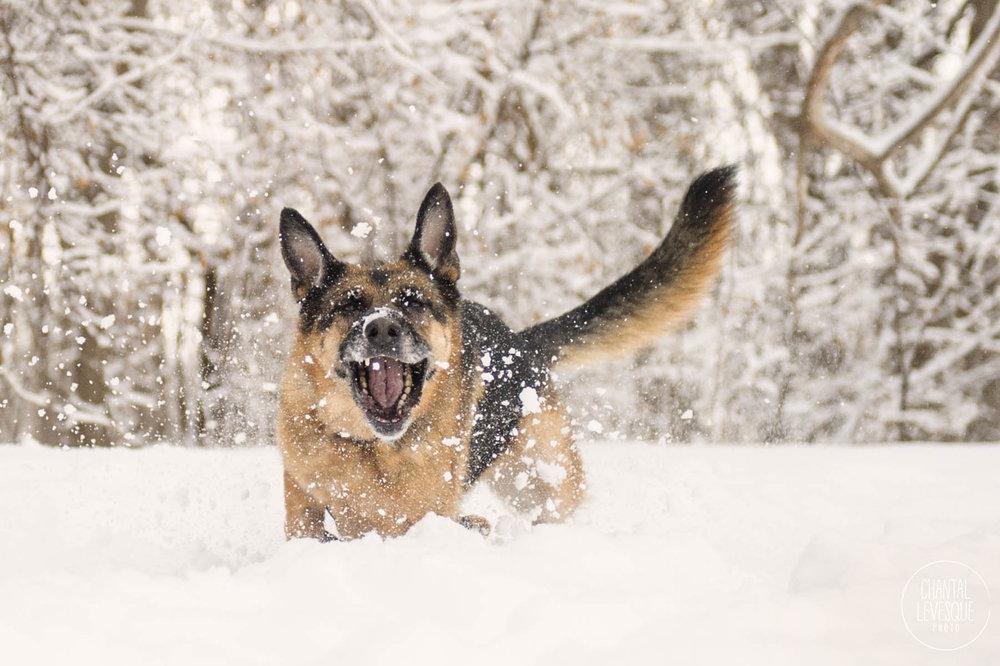 beger-allemand-neige-photographie.jpg