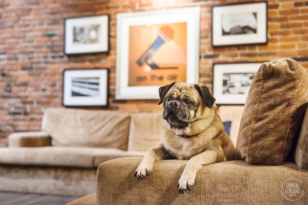 dog-friendly-hotel-alexis-seattle.jpg