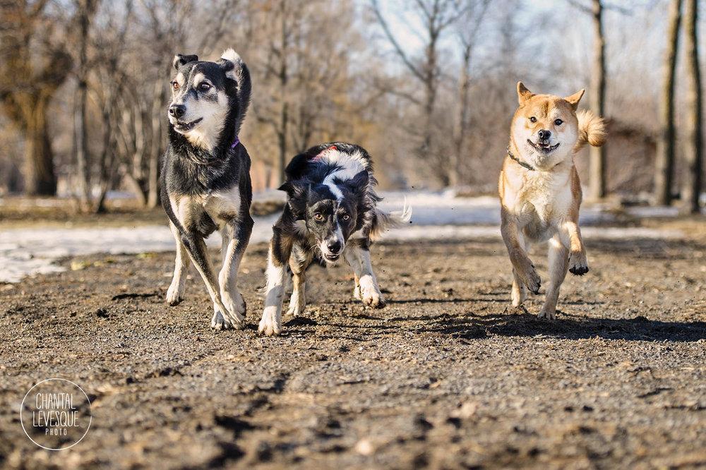 Koro, Helé et Tsumo