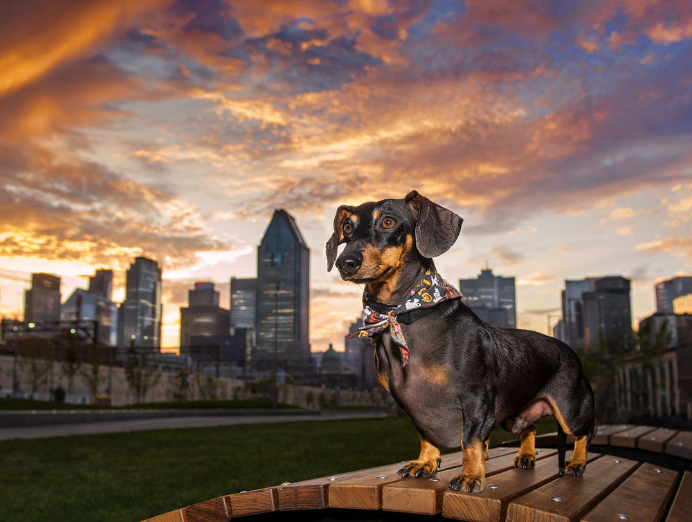 daschund-night-skyline-photography-5258.jpg