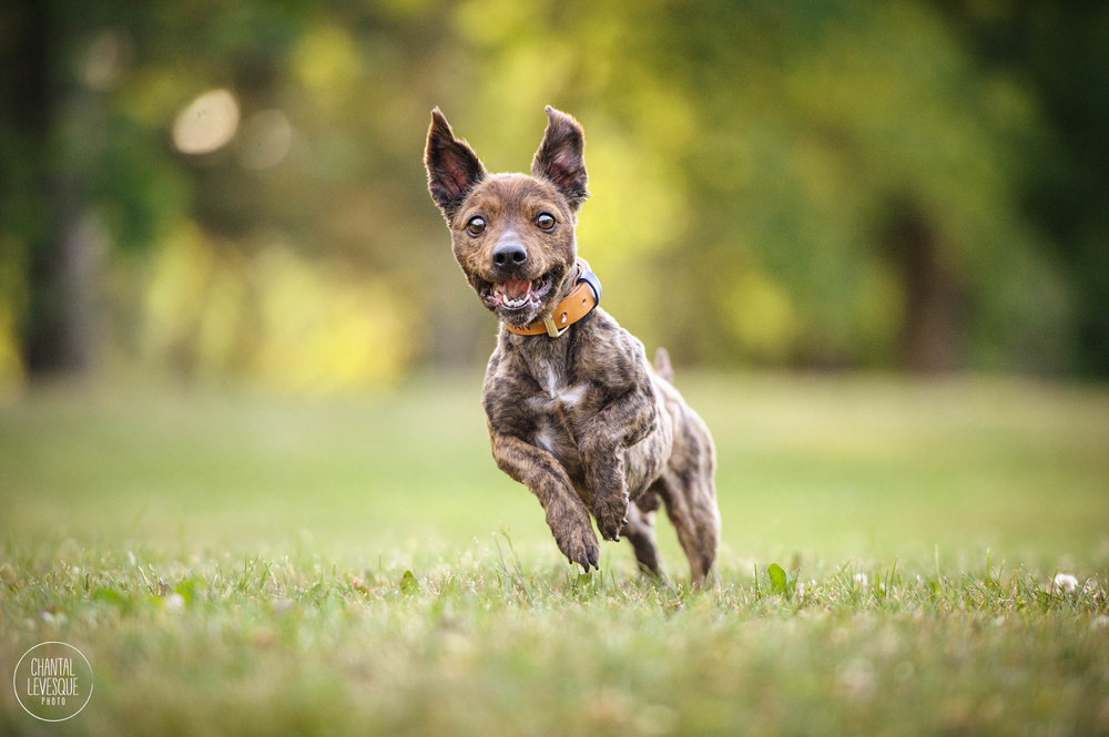 happy-active-dog-photography.jpg