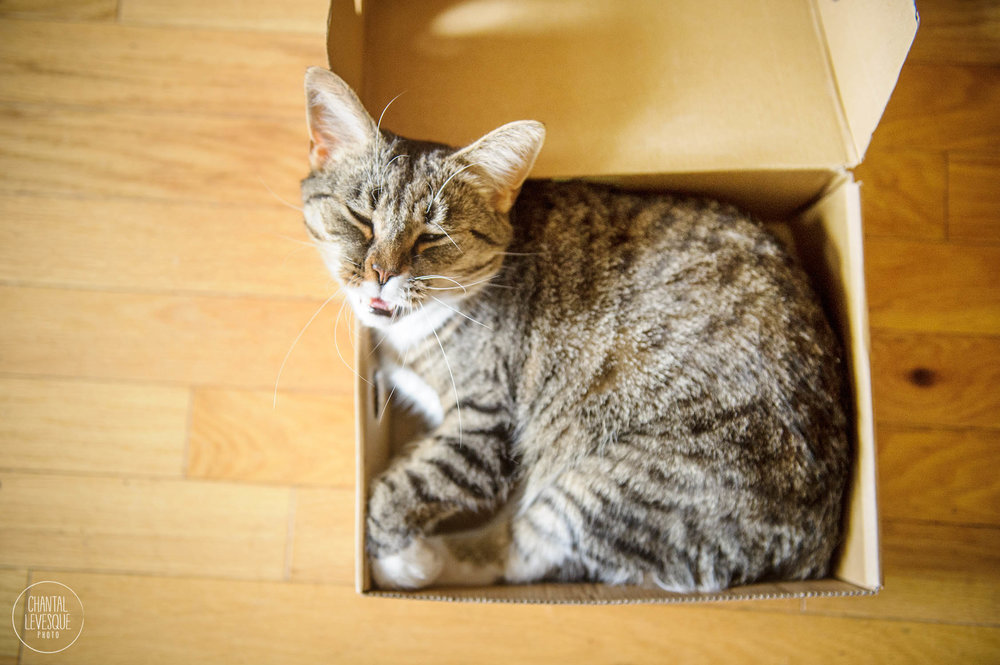 cat-in-a-box-photography.jpg
