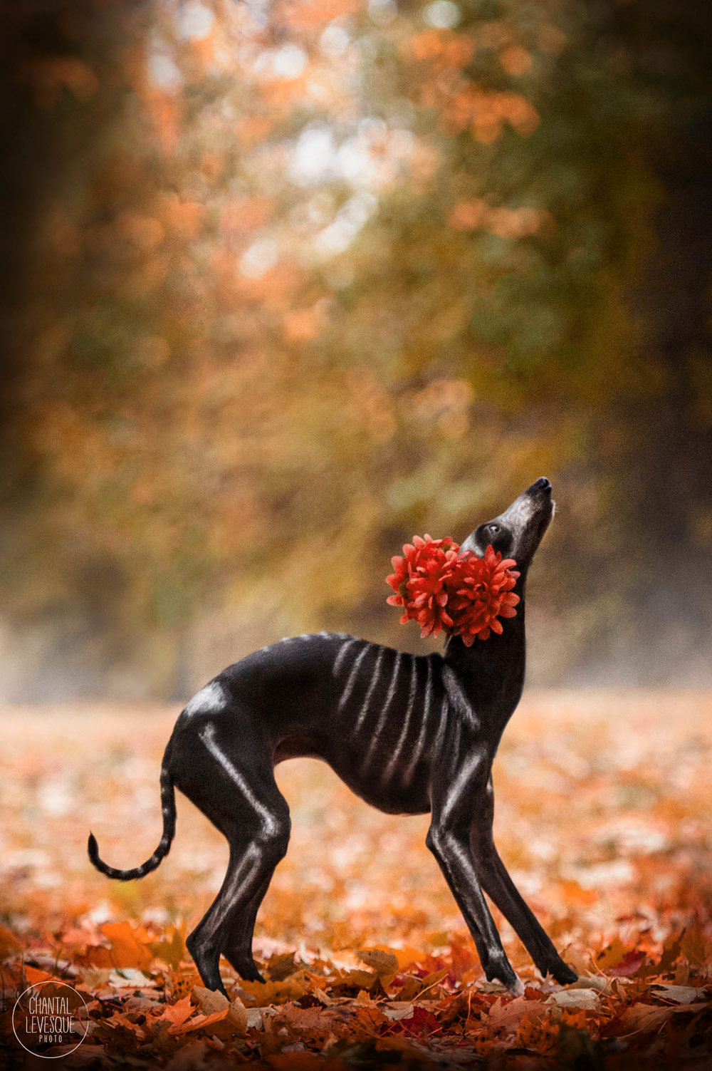 Dia-de-Muertos-doggy-photo-session.jpg