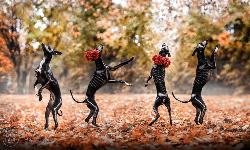 danse-macabre-photoshoot-quebec.jpg