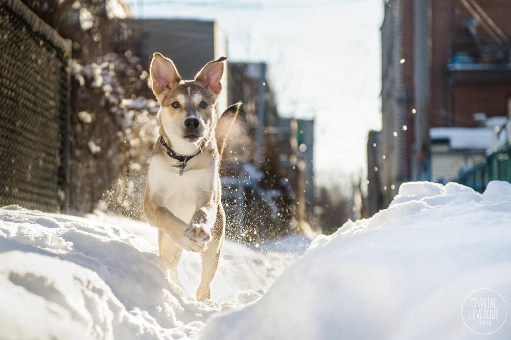 puppy-running-snow.jpg