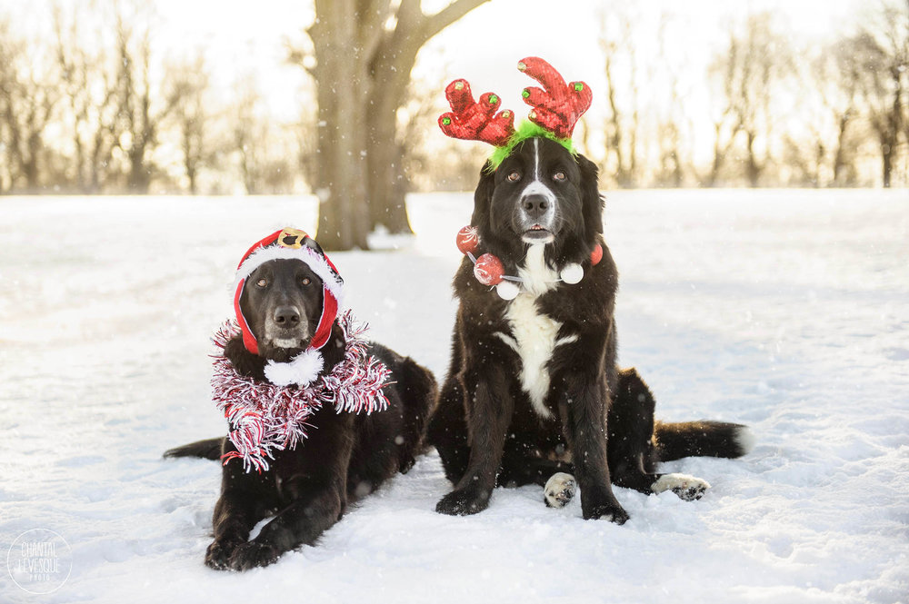 black-dogs-christmas-portrait-snow.jpg