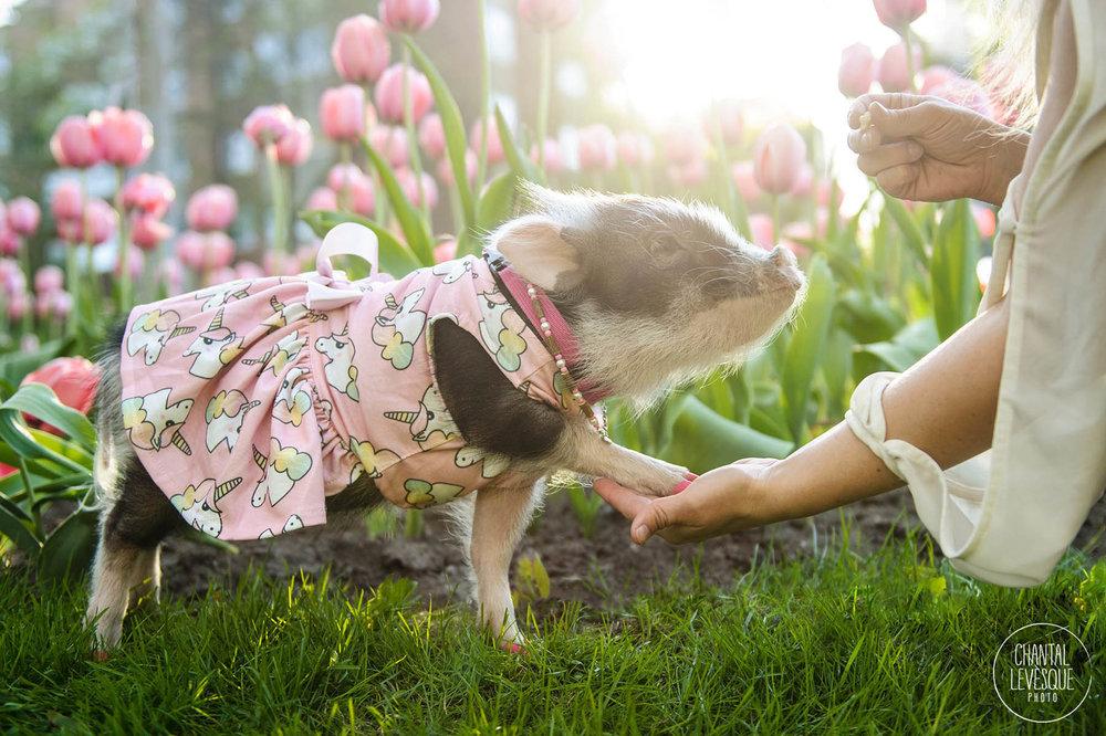 Piglet-dress-spring.jpg