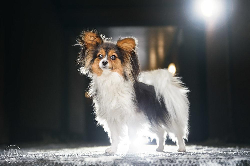 dog-rockstar-bark-and-roll.jpg
