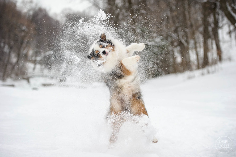 funny-dog-winter-snow.jpg