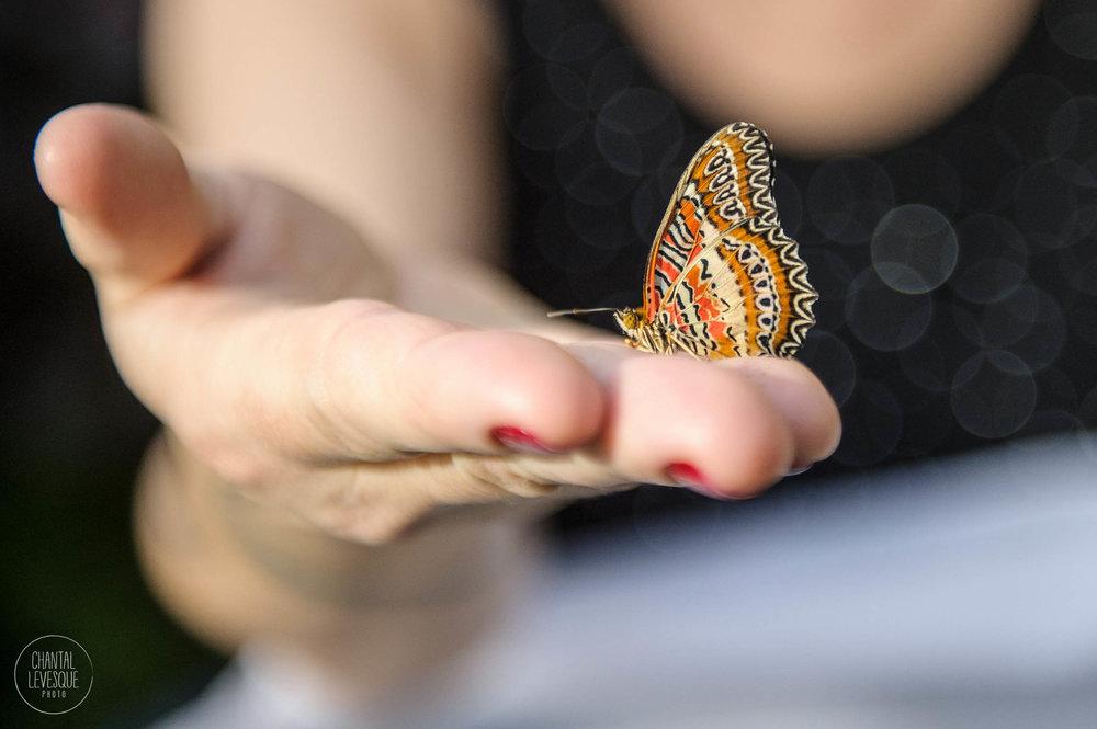 papillons-3612 copy.jpg