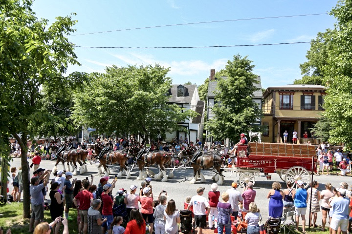 Budweiser Clydesdales at the Chestertown Tea Party Festival 5.26.18 (Photo by Nick Green)