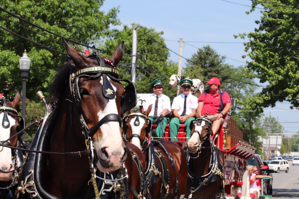 Photo by Nick Green of the Budweiser Clydesdales at the 2018 Chestertown Tea Party Festival