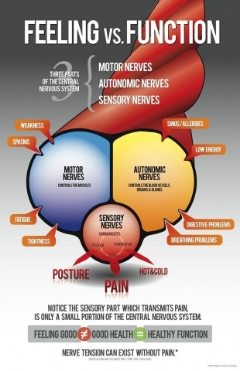 Chiropractic_Nerve_Poster.jpg