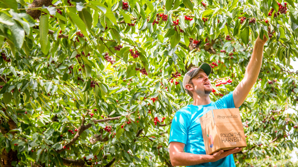 """We wanted everyone to taste what my family grew up on, fresh from the tree taste"" – Josh Horsley"