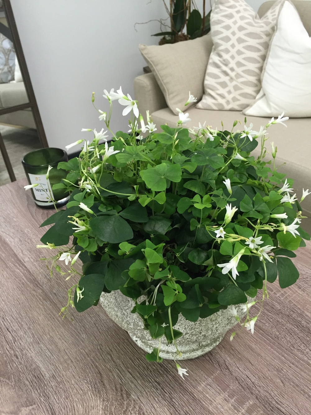How Maxit Flower Design celebrates St. Patty's Day : clovers in the client meeting space.