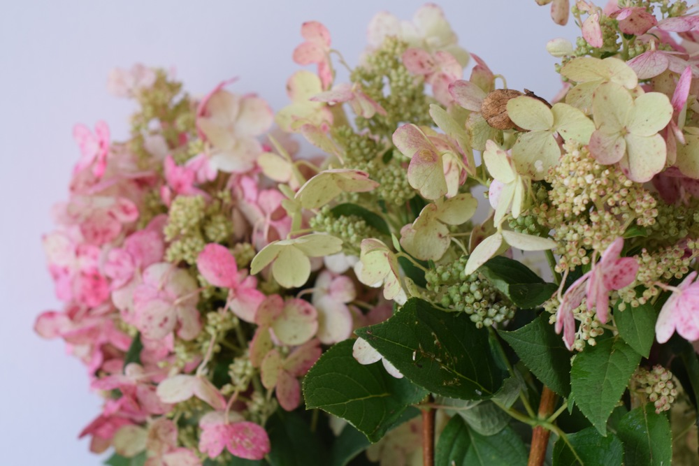 Pink Hydrangea by Maxit Flower Design