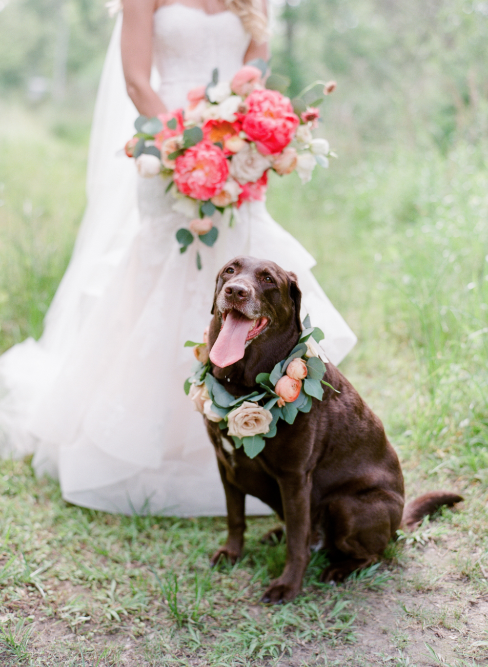 A bride with her bouquet and her dog with a floral collar by Maxit Flower Design