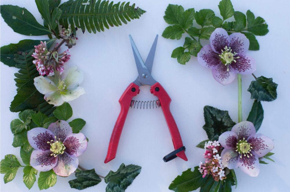 Flower Snips by Floret Flower Farm.