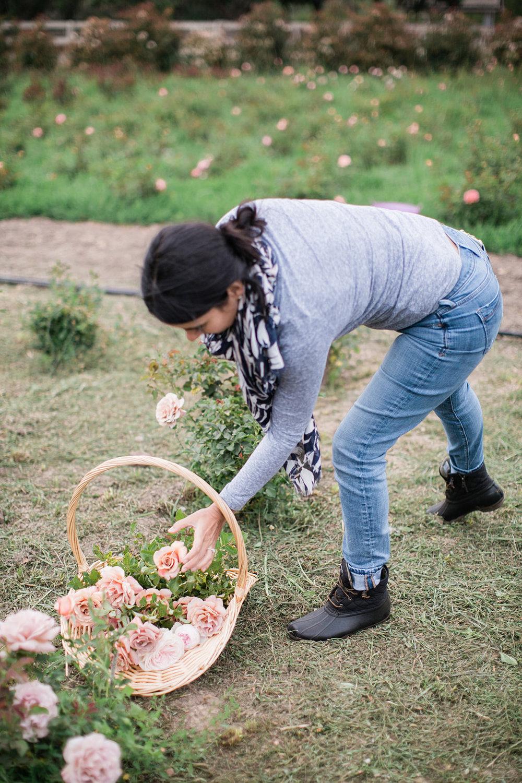 Garce-Rose-Farm-Maria-Maxit-Styling-Garden-Roses.jpg