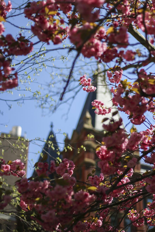 floral_front.jpg