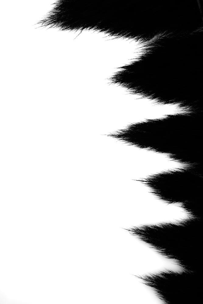 StillLife_12.jpg