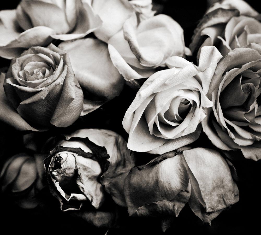 Rose_web.jpg