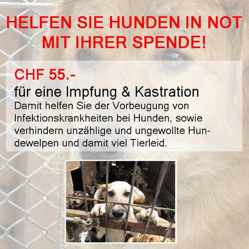 Spende+Kastration-Impfung+fertig.jpg
