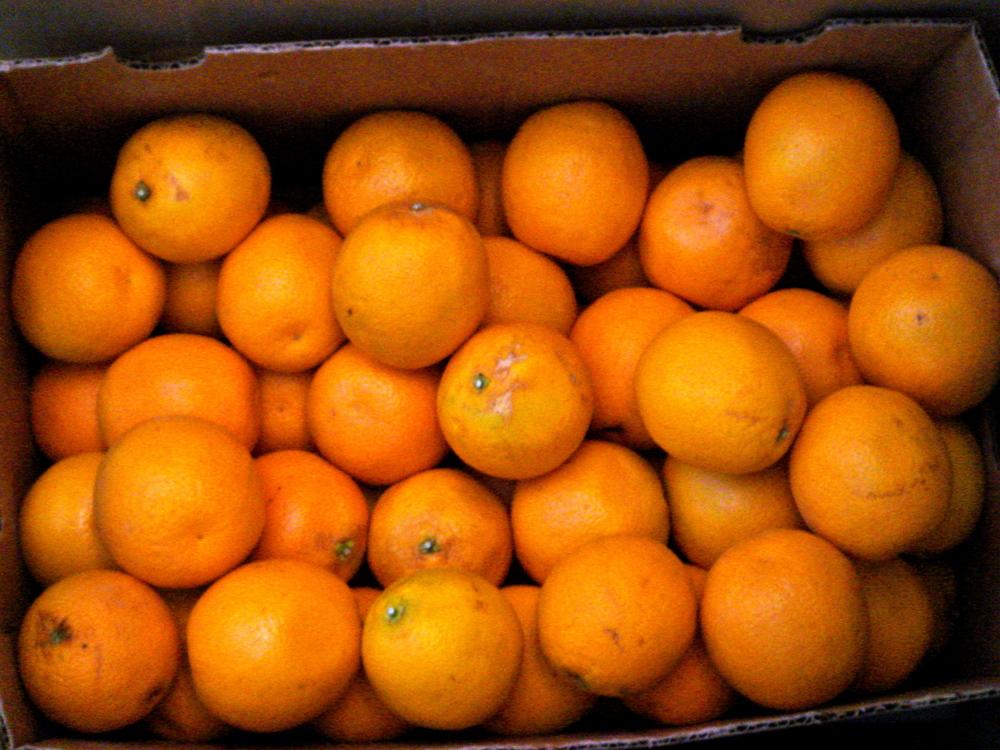 Naranjas Por los Ninos.JPG