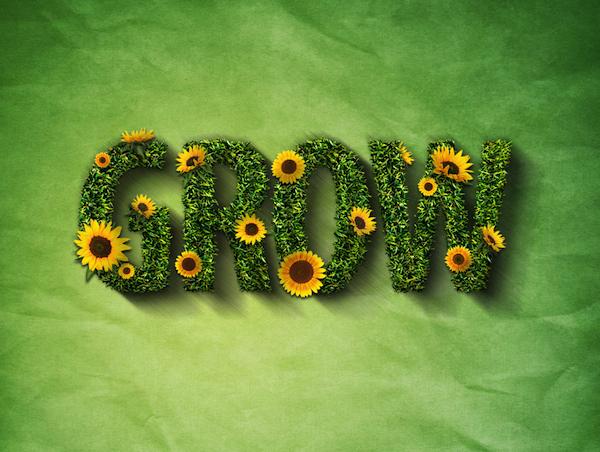 girasoles - sunflowers -